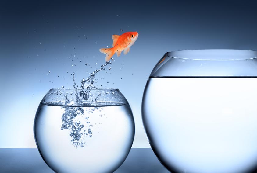 10-hardest-life-fish-bowl.jpg